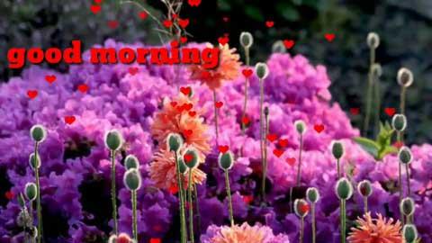 Mile Ho Tum Hum Ko Good Morning Status