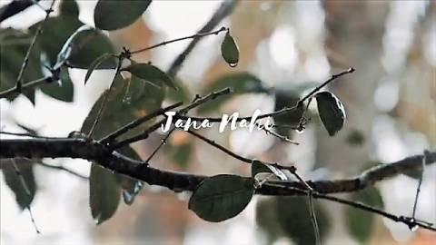Hamdard Love Song Rainy Status