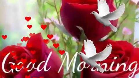 Good Morning Video Song Full Hd